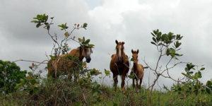 Bild brasilianischer Pferde